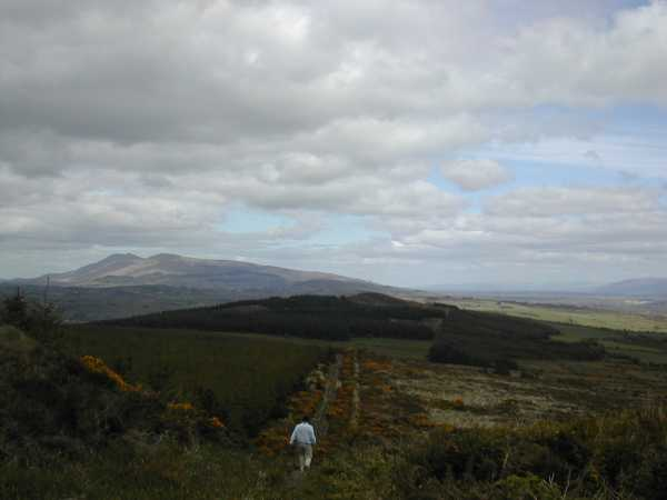 MountainViews.ie Picture about mountain Carrigeenamronety in area Ballyhoura Mountains, Ireland