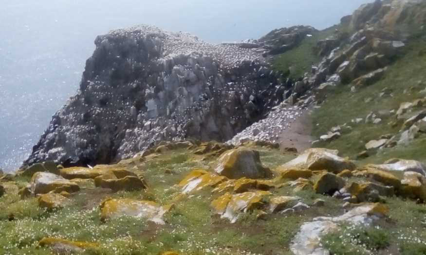 MountainViews.ie Picture about mountain Great Saltee Island in area Wexford Islands, Ireland