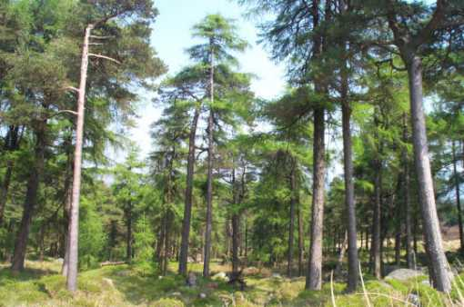 """Forest by Carrigshouk"" from padodes Contract pics"