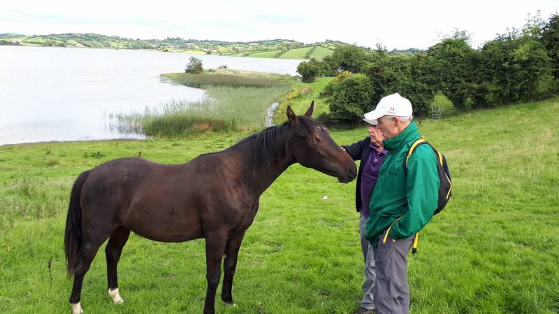 Friendly horse at Lough Ross