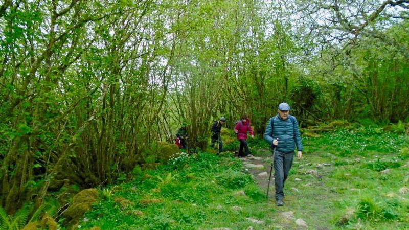 Typical Burren woodland