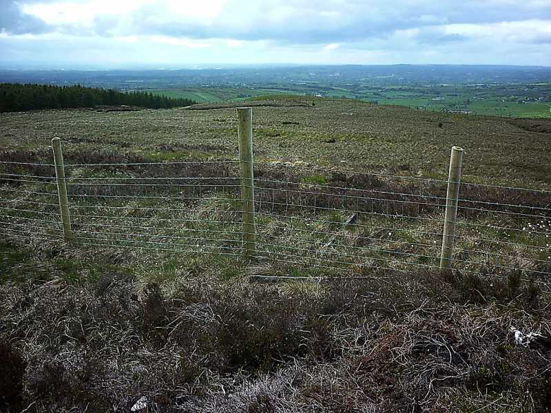 MountainViews.ie Picture about mountain Fir Mountain in area Sperrin Mountains, Ireland
