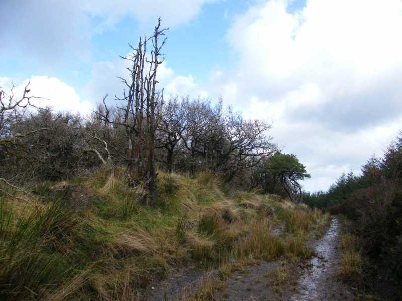 MountainViews.ie Picture about mountain Knocknaman in area Slieve Bloom, Ireland