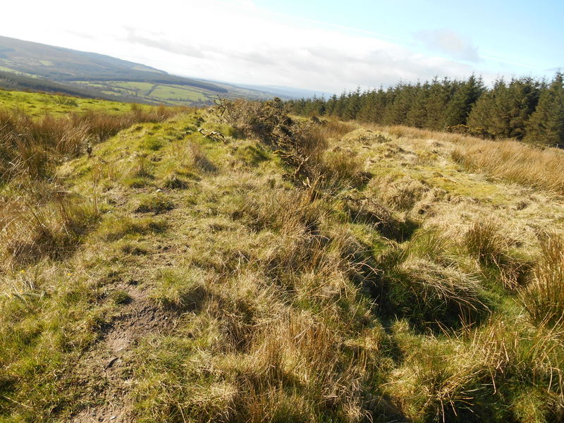 MountainViews.ie Picture about mountain Cumber Hill in area Slieve Bloom, Ireland