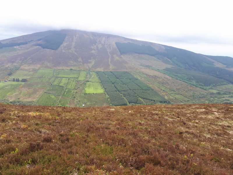 MountainViews.ie Picture about mountain Silvermine Mountains West Top (<i>Sliabh an Airgid (mullach thiar)</i>) in area Midlands SW, Ireland