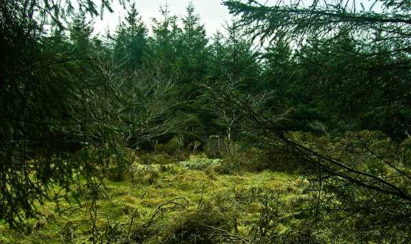 MountainViews.ie Picture about mountain Carricktriss Gorse in area South Midlands, Ireland
