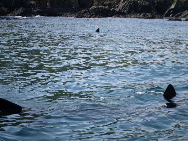 MountainViews.ie Picture about mountain An Cró Mór in area Dingle West, Ireland