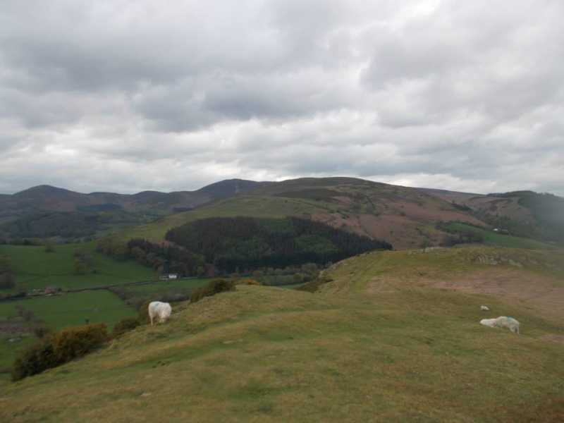 MountainViews.ie Picture about mountain Coed Hyrddyn [Moel Tan y Coed] in area Llandudno to Wrexham, Ireland