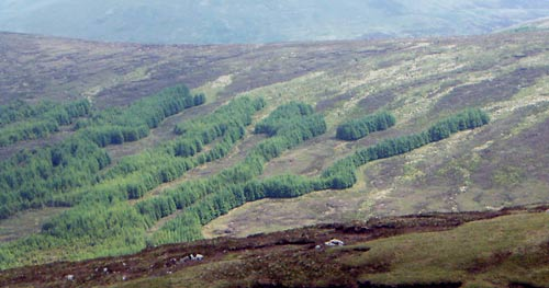 MountainViews.ie Picture about mountain Tomaneena in area Dublin/Wicklow, Ireland