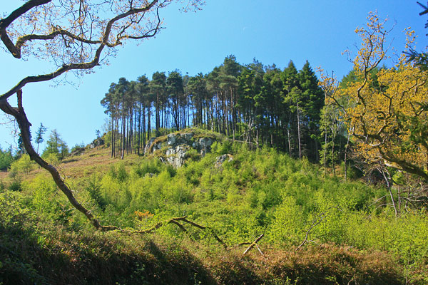 MountainViews.ie Picture about mountain Carrigroe Hill in area North Wexford, Ireland