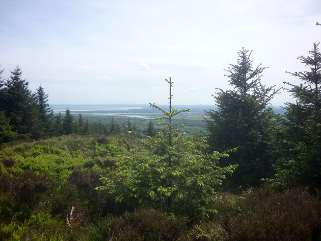 MountainViews.ie Picture about mountain Feede Mountain in area Cooley/Gullion, Ireland