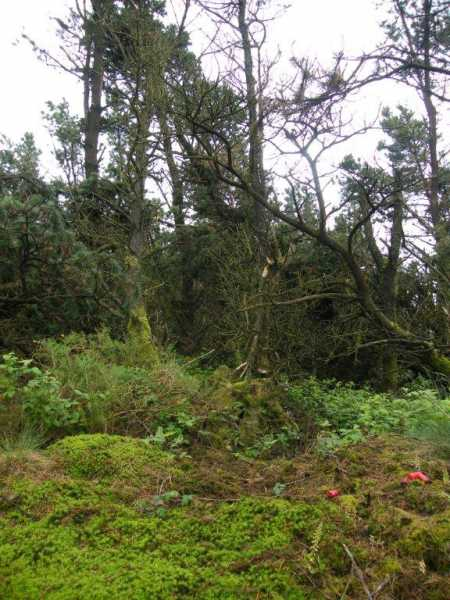 MountainViews.ie Picture about mountain Camaross Hill in area South Wexford, Ireland