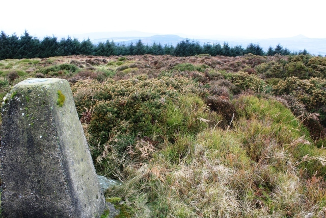 MountainViews.ie Picture about mountain Dunranhill in area Dublin/Wicklow, Ireland